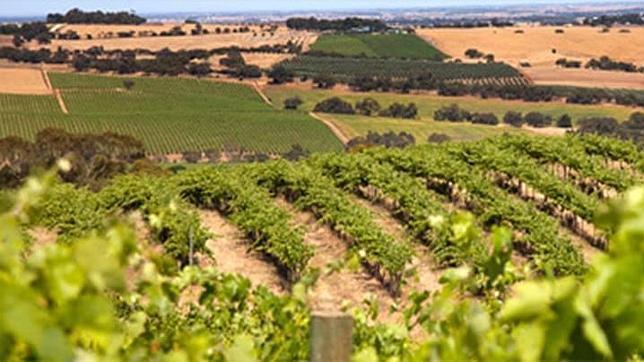 Barossa Valley, zona vitivinícola australiana donde se produce el vino tinto