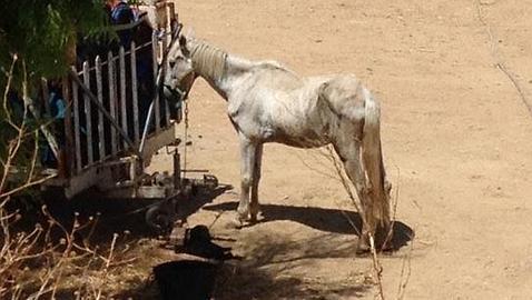 El Circo Nevada cuestionado por el estado de los animales