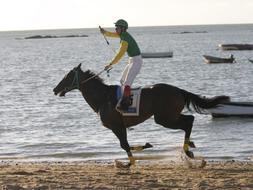 Más de 150 caballos participarán en agosto en las carreras de las playas de Sanlúcar