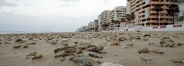 La plaza de Santa María del Mar o la victoria de la movilización de los ciudadanos