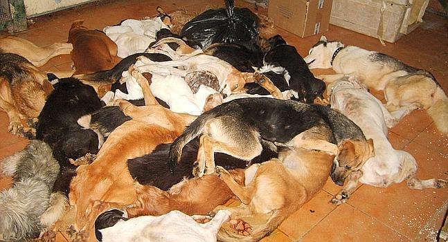 El fiscal pide un año de prisión por los sacrificios de la perrera de Puerto Real