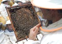 Miel dulce por naturaleza