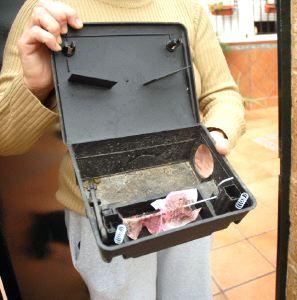 Medio ambiente niega que haya una plaga de ratas la voz - Trampas para cazar ratas ...
