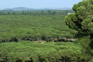 Miles de pinares serán tratados para eliminar las larvas de orugas procesionarias