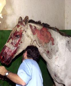 Aplazado por segunda vez el juicio por la muerte de los caballos de Domecq