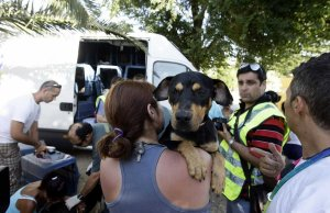 La Guardia Civil evita el envío de 24 perros a Italia apilados sin agua ni ventilación