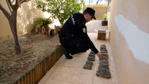 Intervenidas 16 ejemplares de tortuga mora en Almería