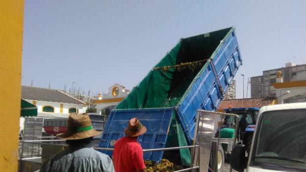Trabajadores de una cooperativa jerezana descargan uva esta semana (J.P.)