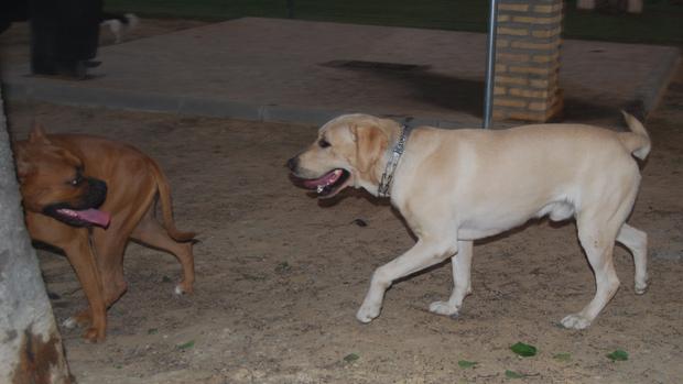 Zona especial para perros de Dos Hermanas / L.M.
