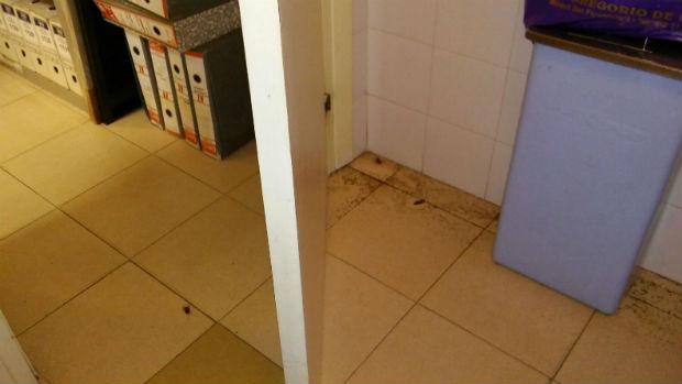 Cucarachas muertas en uno de los baños