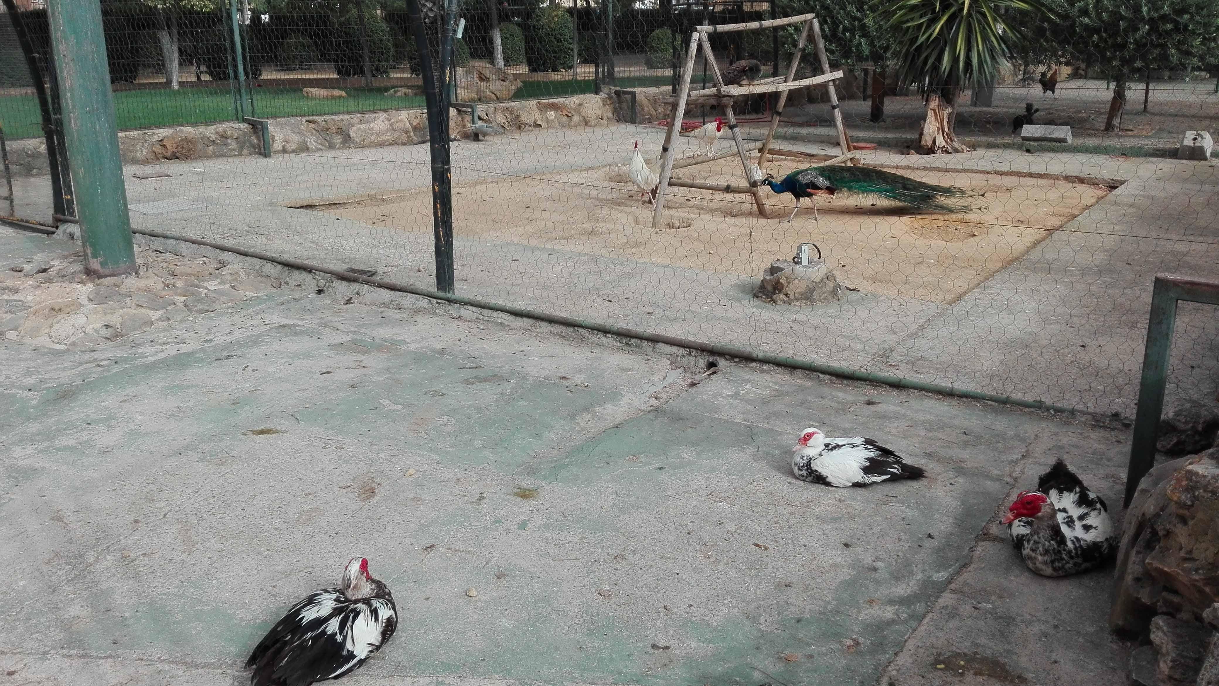 Los animales del parque de Consolación de Utrera/ A.F.