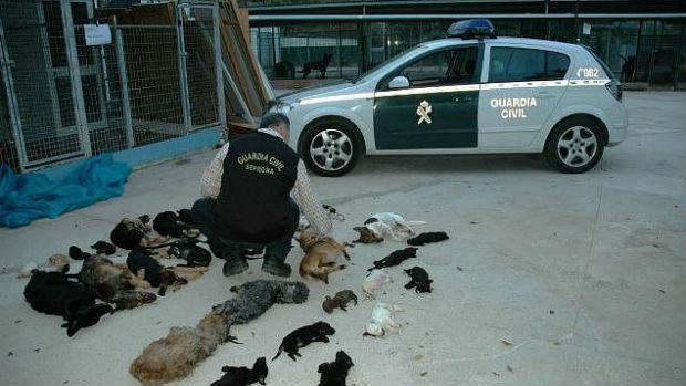 Un agente cuenta los cuerpos de animales hallados en neveras