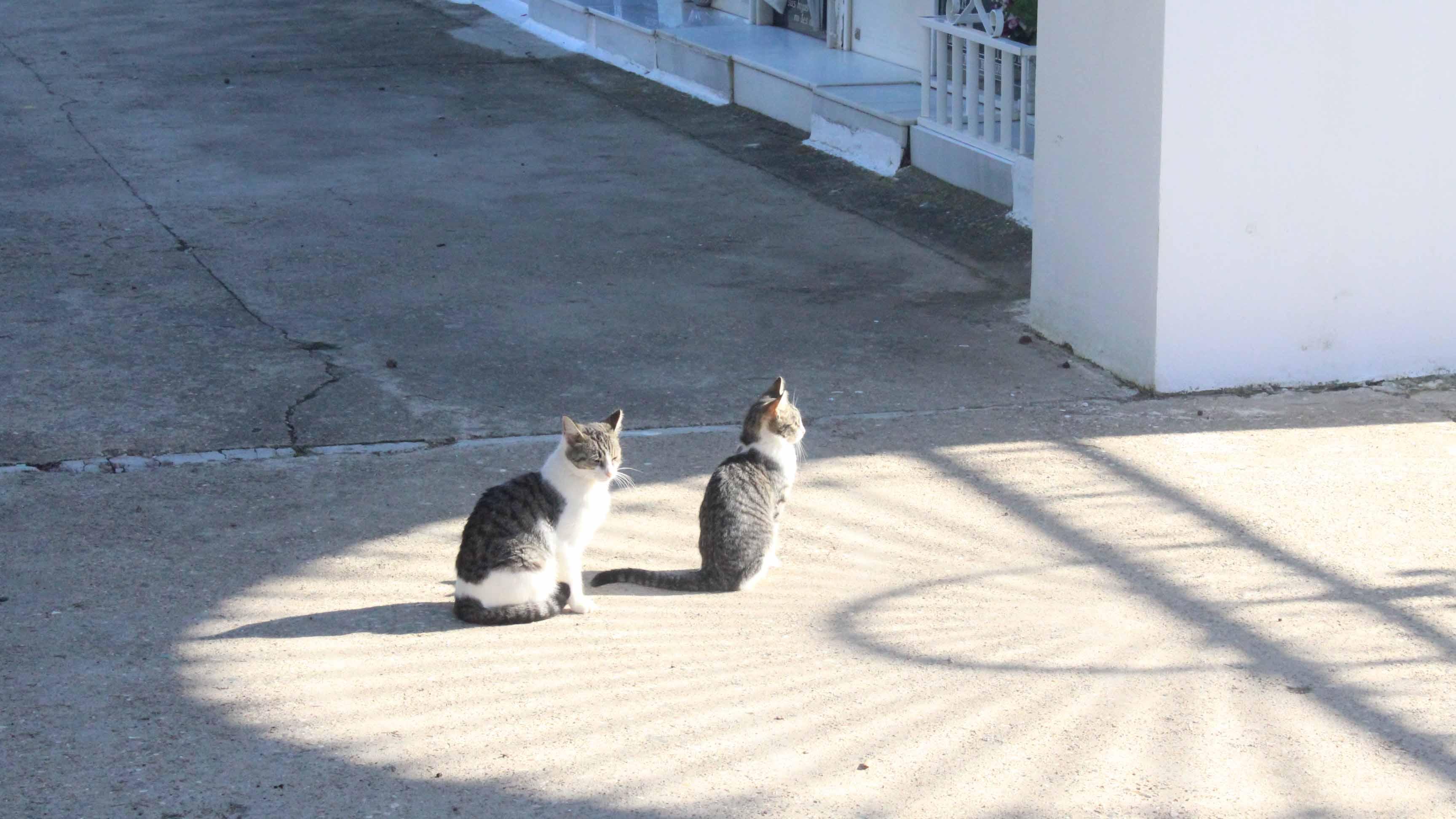 Los gatos están presentes en muchas zonas de Utrera