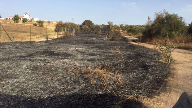 El fuego ha afectado a varias fincas de olivar y a vegetación de un arroyo/ABC
