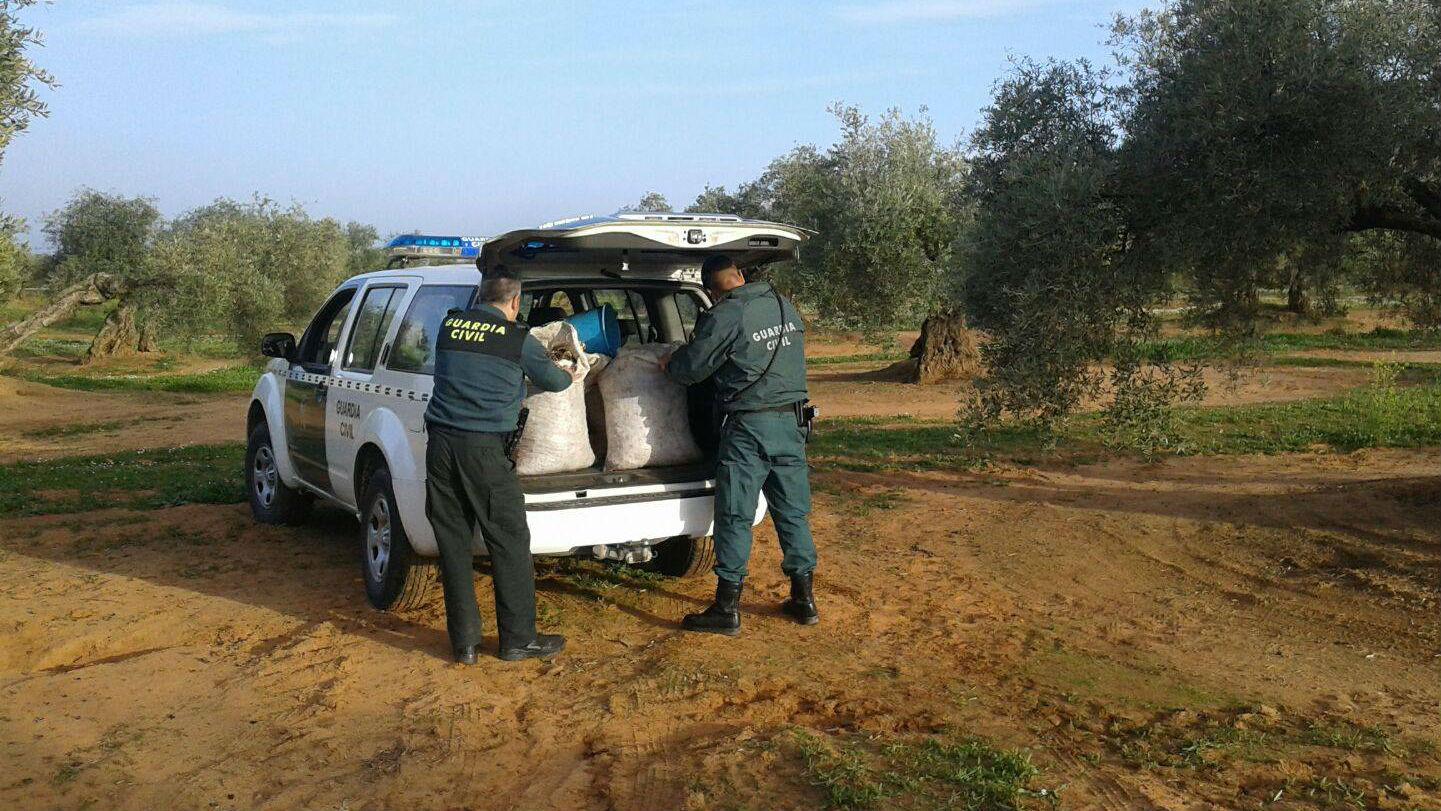 Dos agentes introducen en su vehículo aceituna aprehendida.