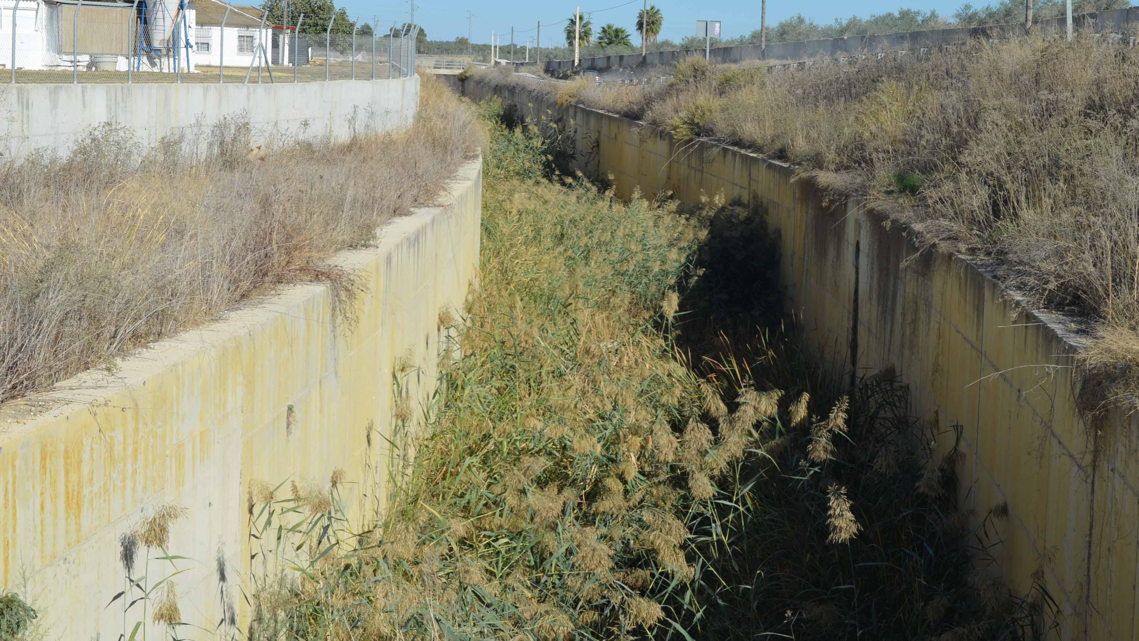 La vegetación se ha hecho dueña de este canal en Utrera