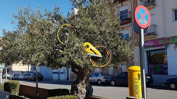 Una bicicleta, en lo alto de un olivo en Granada