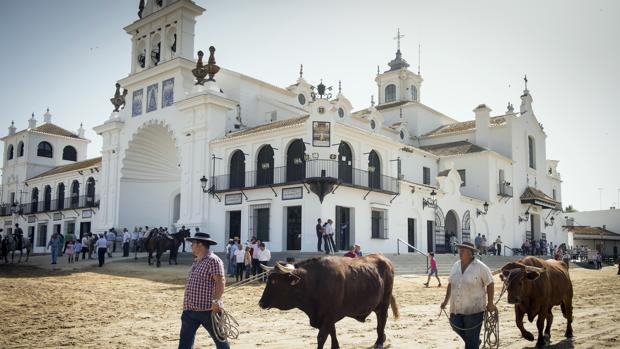 Dos boyeros conducen a sus bueyes en la aldea almonteña de El Rocío