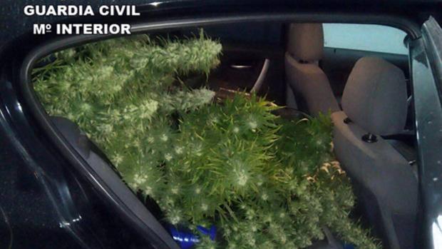Plantas de marihuana en el interior del coche