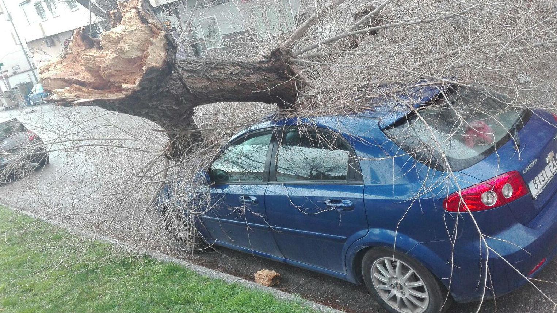 Un árbol arrancado por el viento ha producido daños en un vehículo estacionado en una calle de Jaén