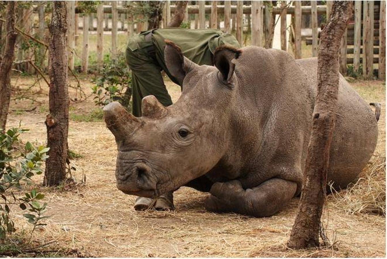 Vietnam emprenderá medidas urgentes para combatir el tráfico ilegal de cuerno de rinoceronte