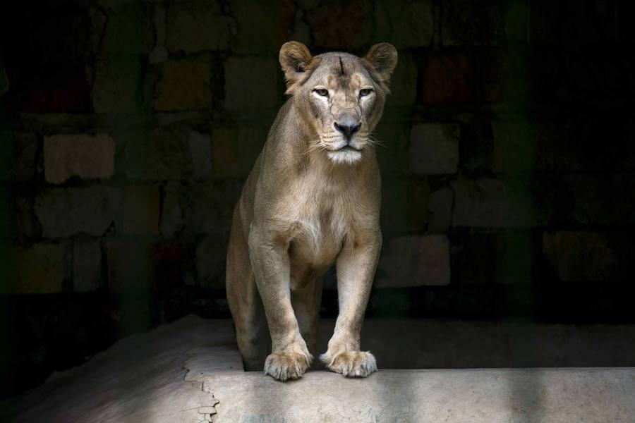 Un zoo de Nicaragua necesita ayuda para cuidar de su millar de ejemplares de 90 especies