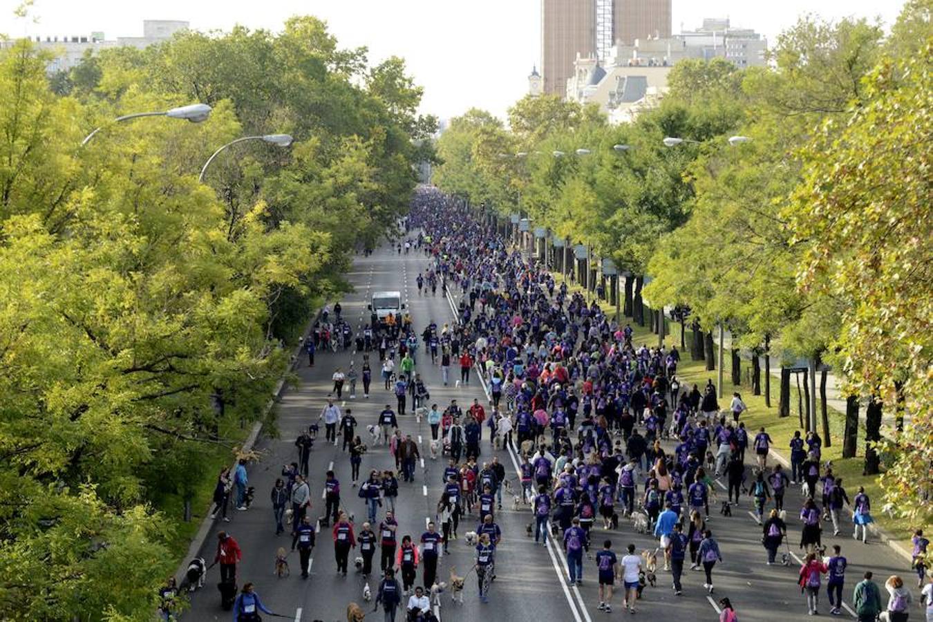 """El """"Perroton"""" en el paseo de la castellana. La carrera de canes y amos ha reunido a miles de personas"""