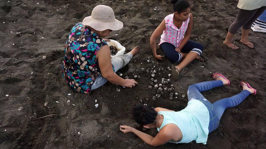 Espectacular «arribada» de decenas de miles de tortugas loras a Costa Rica