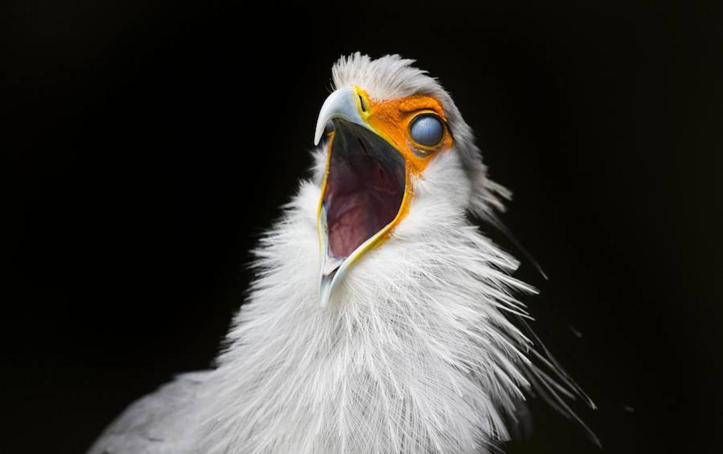 El mayor santuario de aves de África