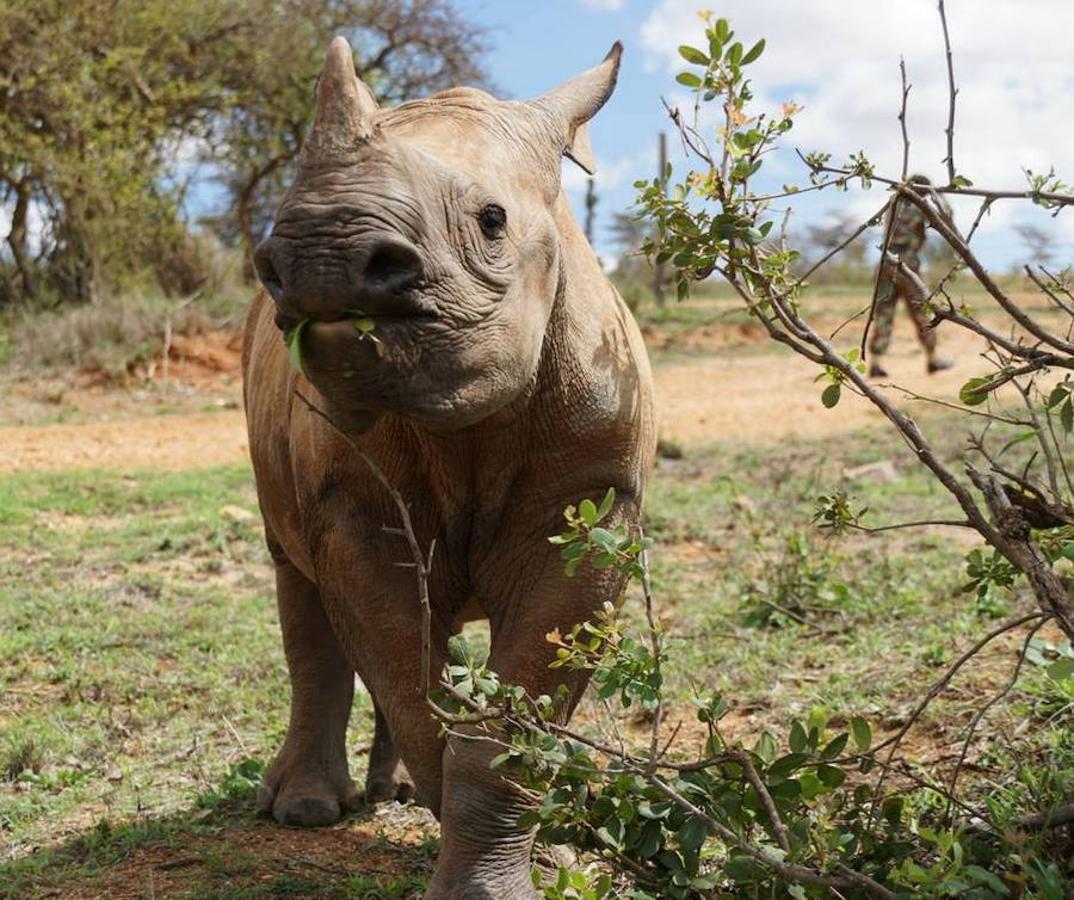 Tres rinocerontes menos cada día