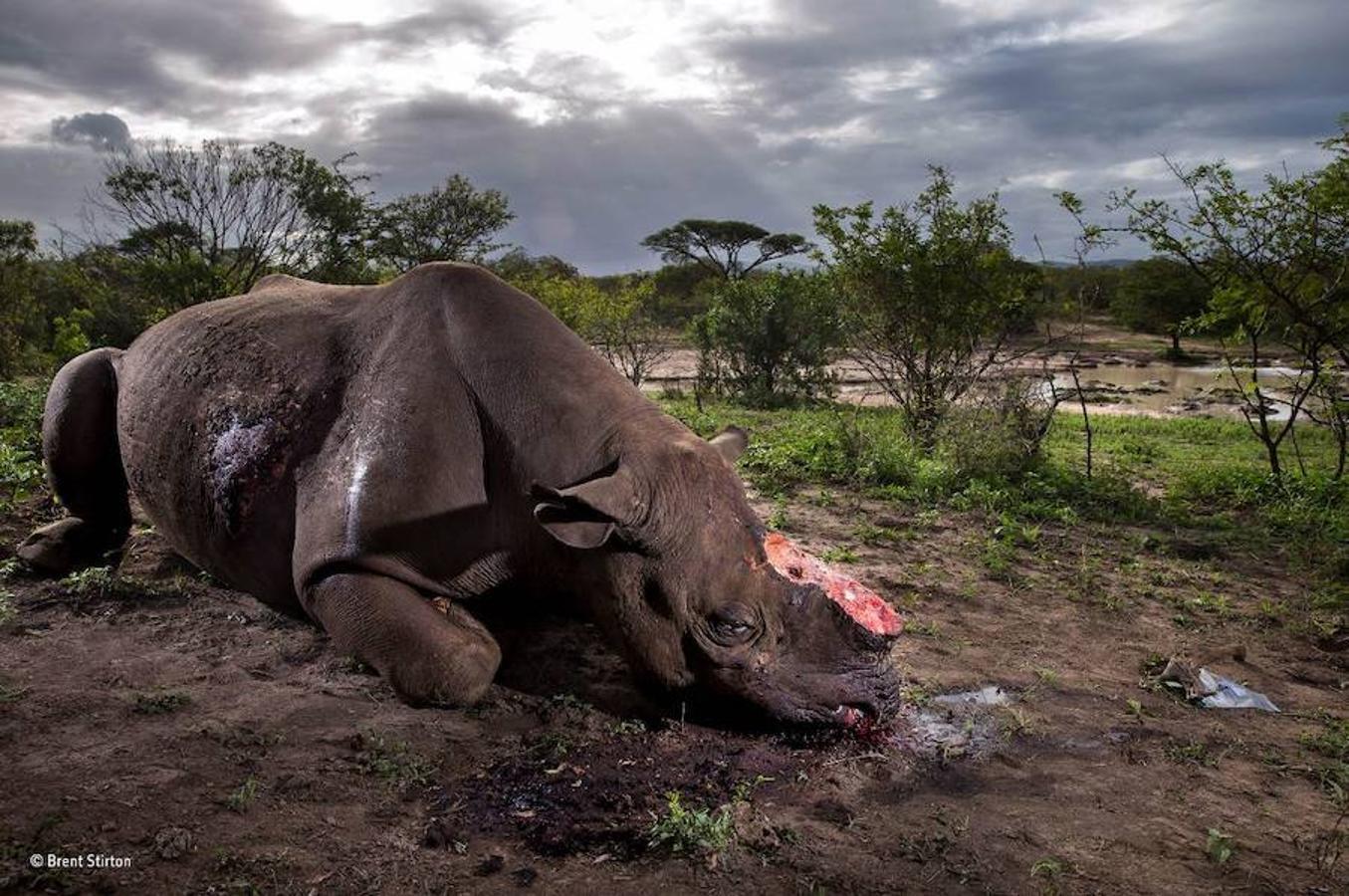 Este rinoceronte ha ganado el premio principal del concurso