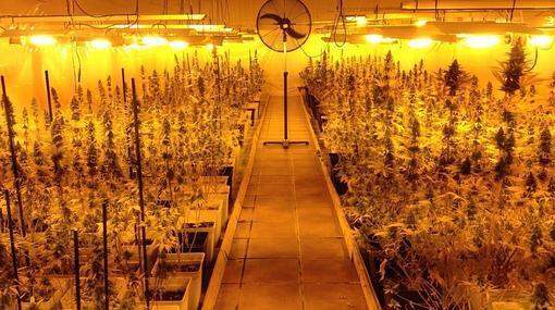 Otra de las plantaciones