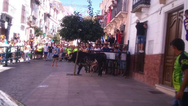 UN momento de la celebración del toro de cuerda en Carcabuey