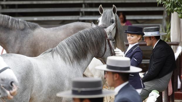 Jinetes y caballos en la última edición de Cabalcor