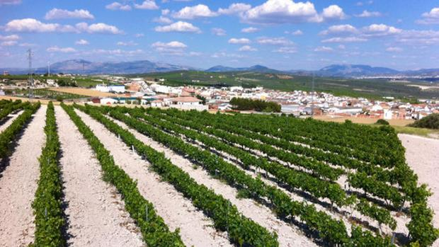 Paisaje de vid y lagares entre Moriles y Aguilar de la Frontera