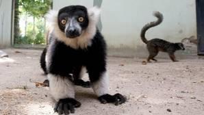 Y la mayor subida fiscal de Córdoba es... para el zoo con un 50 por ciento