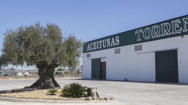 Planta de Aceitunas Torrent en Aguilar de la Frontera