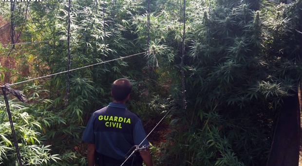 La Guardia Civil se incauta en Hornachuelos y Fuente Palmera de más de 400 kilos de marihuana