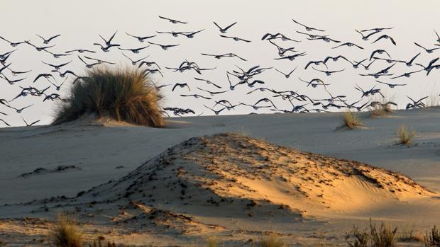 Concentración de aves sobre las dunas del Parque Nacional