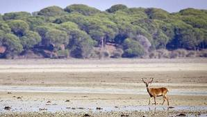 El entorno de Doñana pide voz y parte para afrontar el futuro
