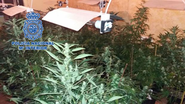 Una de las plantaciones «indoor» localizadas por los agentes