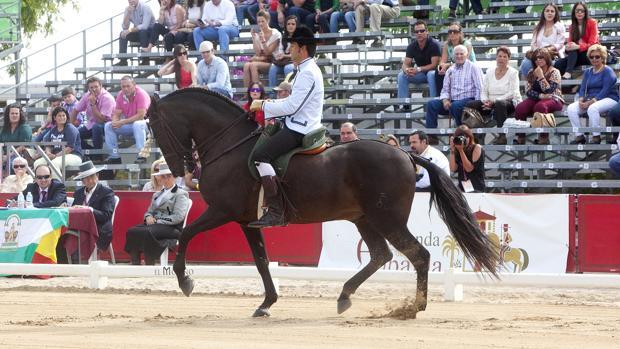 Exhibición ecuestre de la pasada edición del Salón Internacional del Caballo de Córdoba