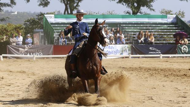 Un jinete en una de las competiciones del II Salón Internacional del Caballo de Córdoba
