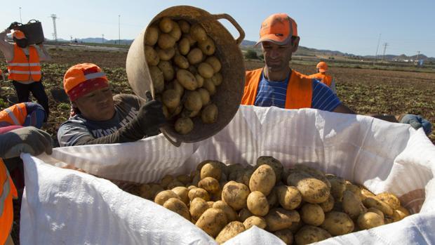 Recogida de patatas en una finca