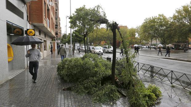 Árbol tronchado en la avenida del Aeropuerto