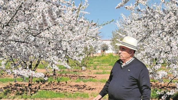 Francisco Morales, entre almendros en flor