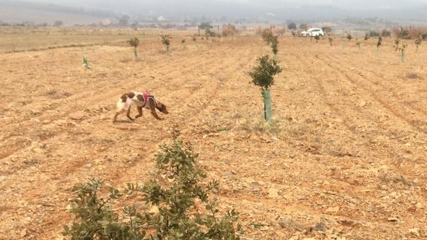 C rdoba impulsa los viveros bajo tierra para el cultivo de for Viveros en cordoba