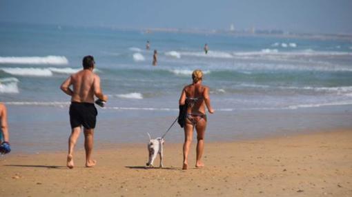 Los perros no pueden andar sueltos por la playa