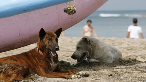 Los animales deben estar en todo momento controlados