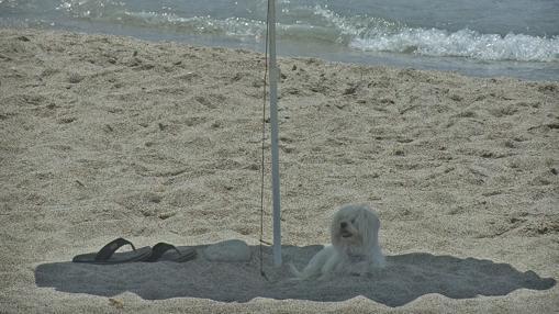 Esta playa cuenta con una zona habilitada para mascotas de 400 metros